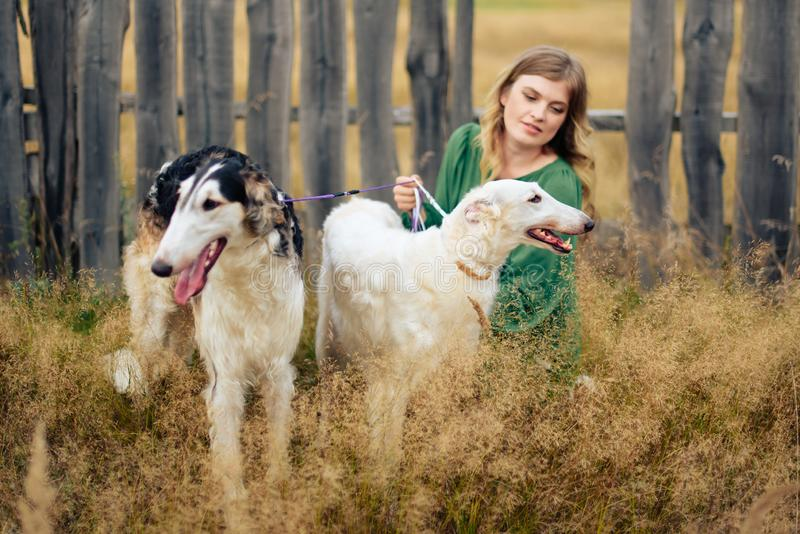 Beautiful girl in a dress on nature with Russian greyhound dogs 1. Beautiful girl in a dress on nature with Russian greyhound dogs royalty free stock images