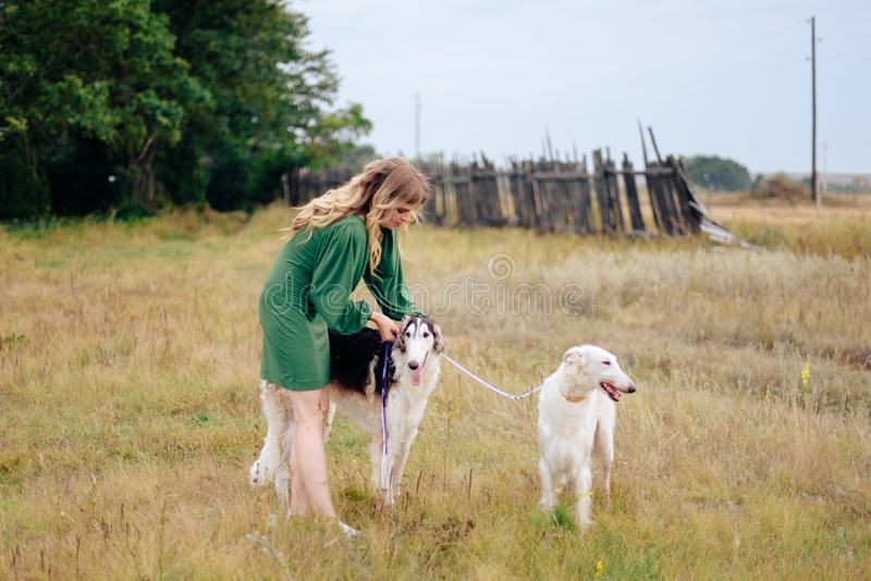 Beautiful girl in a dress on nature with Russian greyhound dogs 1. Beautiful girl in a dress on nature with Russian greyhound dogs royalty free stock photography