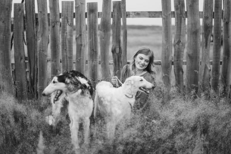 Beautiful girl in a dress on nature with Russian greyhound dogs 1. Beautiful girl in a dress on nature with Russian greyhound dogs stock images