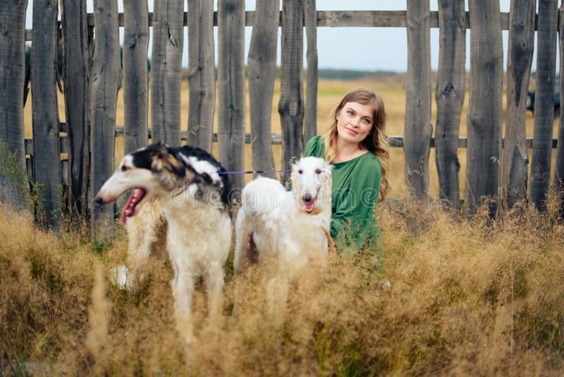 Beautiful girl in a dress on nature with Russian greyhound dogs 1. Beautiful girl in a dress on nature with Russian greyhound dogs stock photo