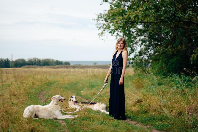 Beautiful girl in a dress on nature with Russian greyhound dogs 1. Beautiful girl in a dress on nature with Russian greyhound dogs stock photography