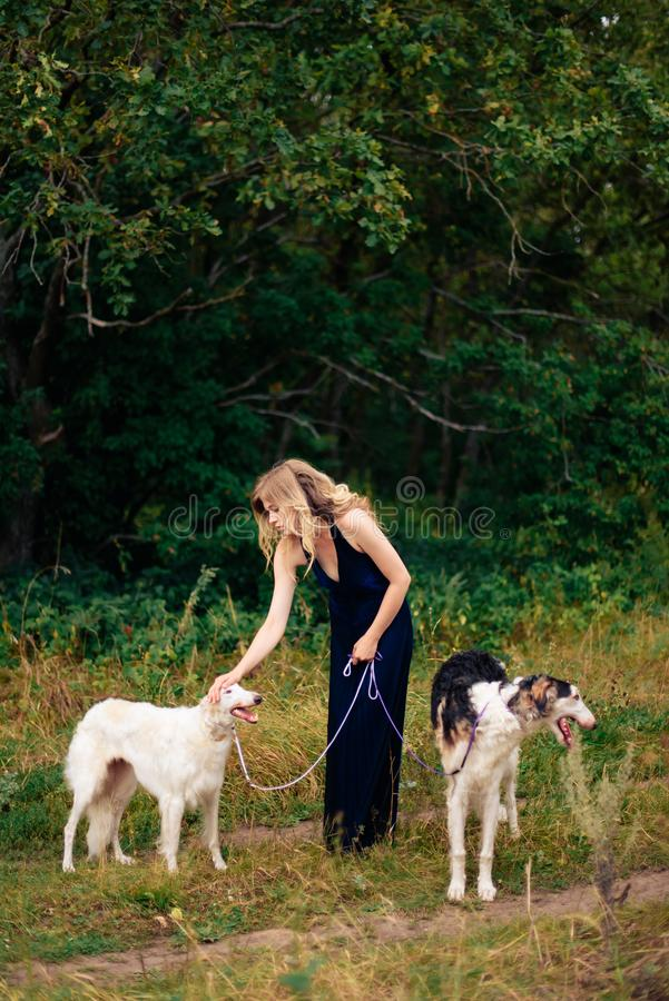 Beautiful girl in a dress on nature with Russian greyhound dogs 1. Beautiful girl in a dress on nature with Russian greyhound dogs royalty free stock image