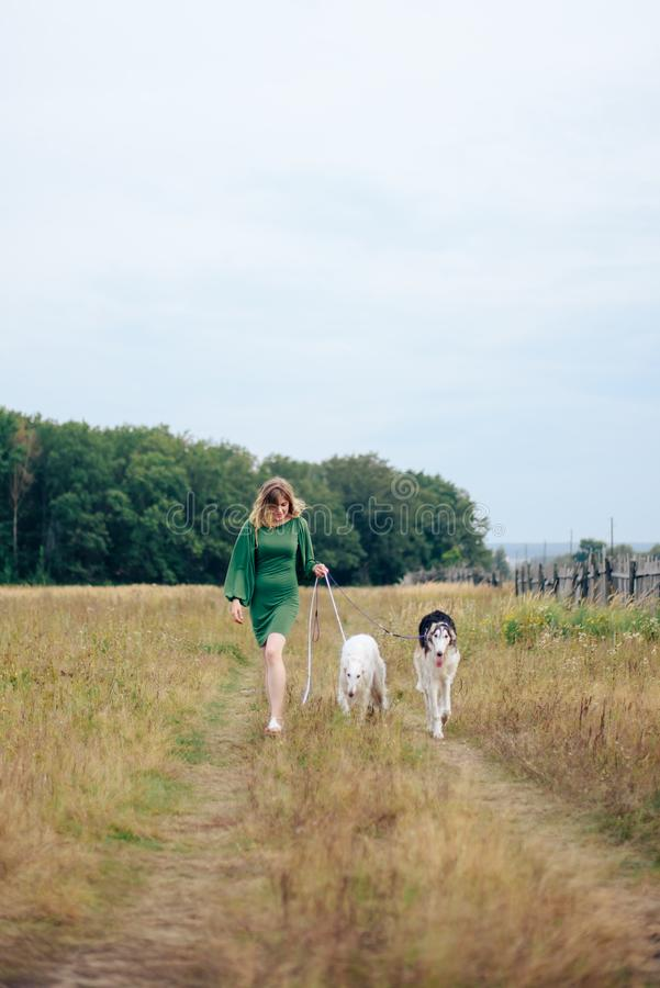 Beautiful girl in a dress on nature with Russian greyhound dogs 1. Beautiful girl in a dress on nature with Russian greyhound dogs royalty free stock photos