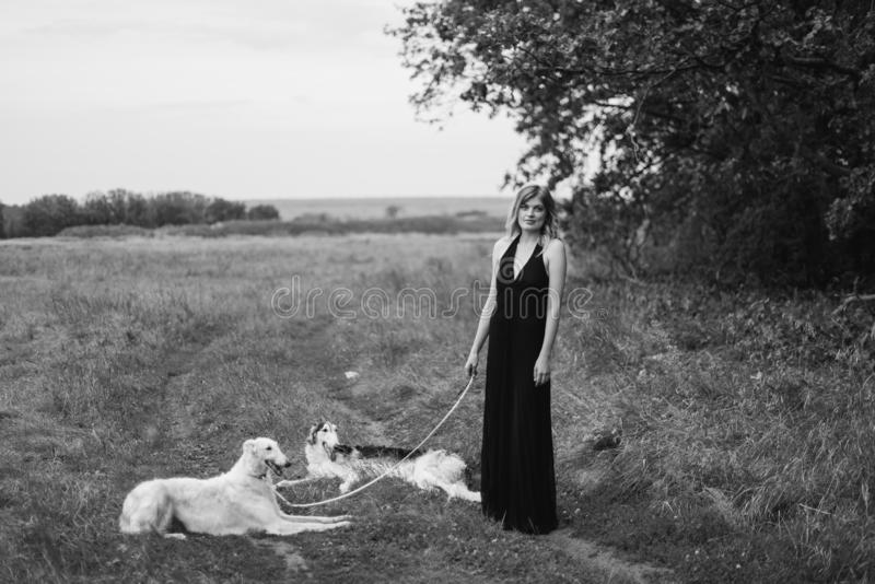 Beautiful girl in a dress on nature with Russian greyhound dogs 1. Beautiful girl in a dress on nature with Russian greyhound dogs stock image