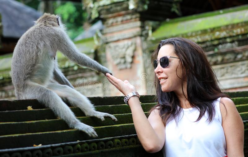Beautiful girl holding hands with monkey at monkeys forest in Bali Indonesia, pretty woman with wild animal. stock images