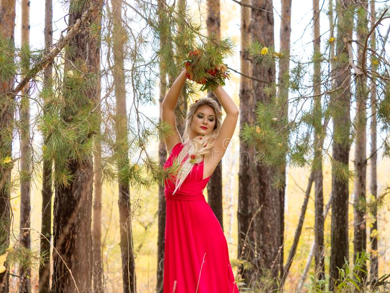 Young woman in a red dress with a bouquet of mountain ash among a pine forest. Beautiful girl in a long red dress holding her hands up posing among the pine royalty free stock photos