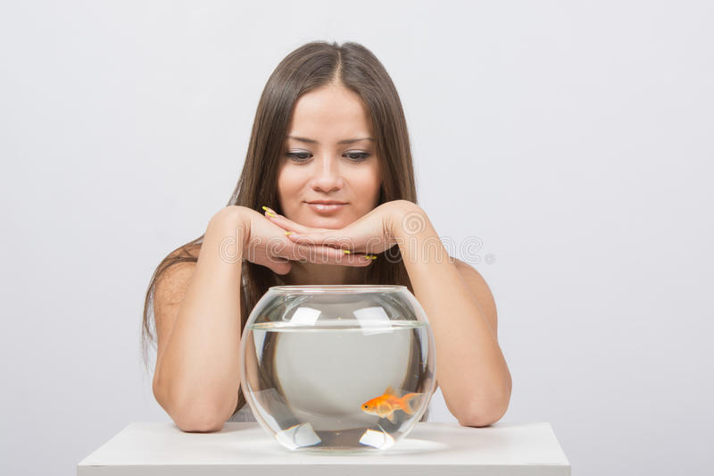 Beautiful girl looks at the aquarium presented with goldfish. A young girl sits next to a round aquarium in which swimming goldfish royalty free stock photography