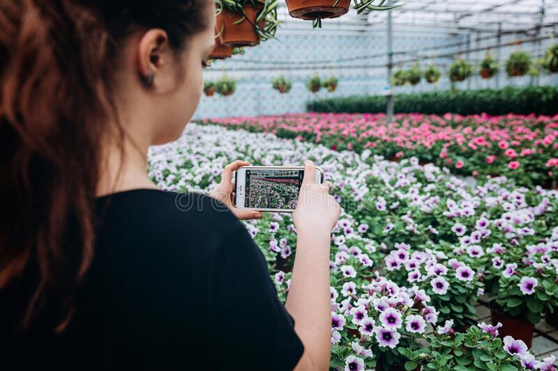 Beautiful long-haired girl makes a photo on the phone in the greenhouse. Photographs petunias. Beautiful girl makes a photo on the phone in the greenhouse royalty free stock photography