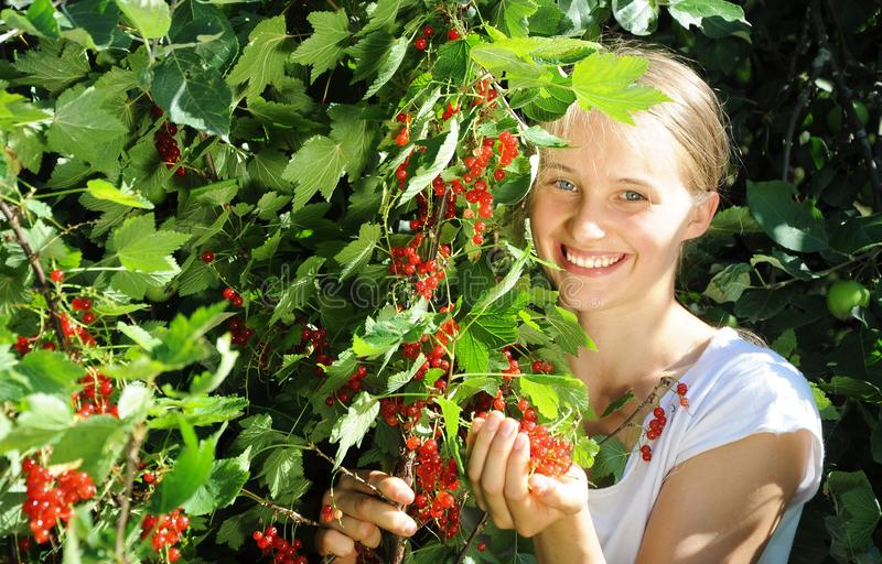 Beautiful girl is picking red currant royalty free stock image