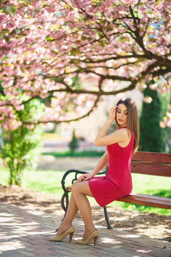 Beautiful girl posing to the photographer against the background of blooming pink trees. Spring. Sakura. April stock photo