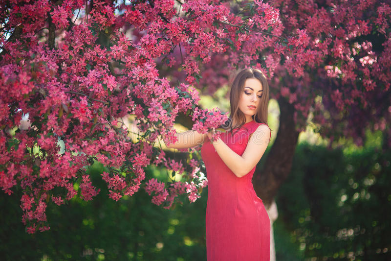 Beautiful girl posing to the photographer against the background of blooming pink trees. Spring. Sakura. April stock images