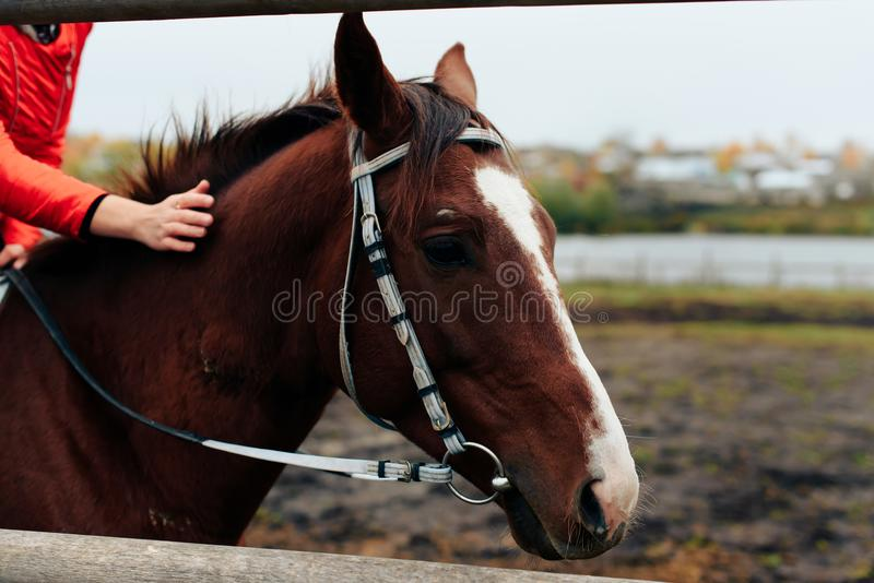 beautiful girl rides a horse in a village in the fall stock image