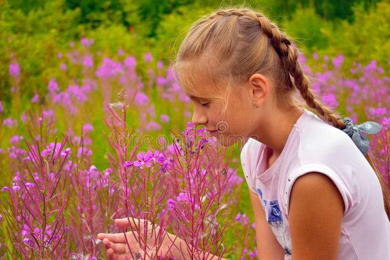 Beautiful girl smells pink flowers in garden. Child in fragrant flowers in summer royalty free stock photo
