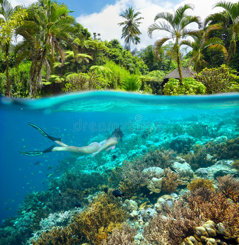 A beautiful girl is snorkelling in the sea full of amazing coral reefs stock photography