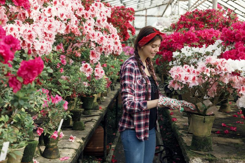Beautiful girl student in a plaid shirt with a red headband wearing work gloves. While preparing for the biology lesson in greenhouse, colorful flowers on royalty free stock photos