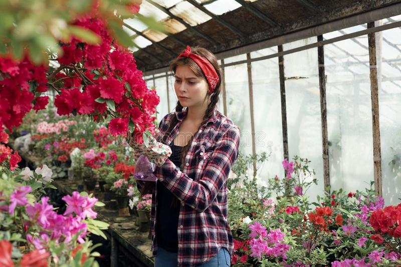 Beautiful girl student with a red headband care flowers in greenhouse in biology class. Flower care and watering concept stock photography
