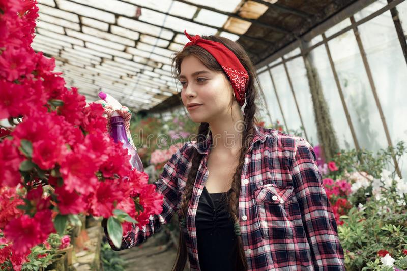 Beautiful girl student with a red headband care flowers in greenhouse in biology class. Flower care and watering concept royalty free stock image