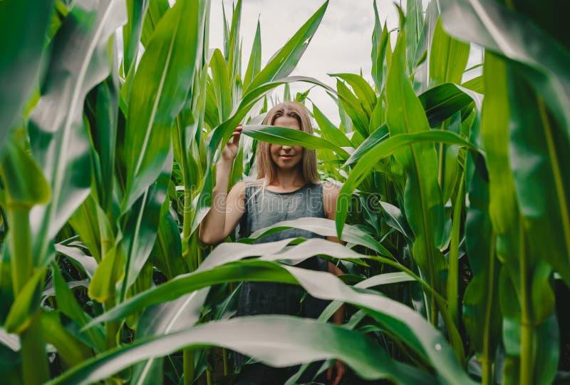 Beautiful girl walking and hiding in the green corn field stock photos