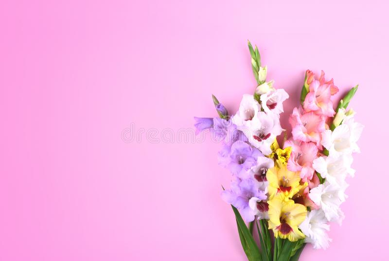 Beautiful gladiolus flowers on trendy pink background. royalty free stock photos