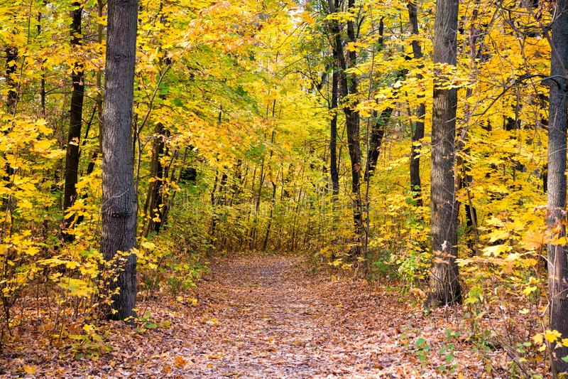 Beautiful glorious fall. Fall landscape. Fall forest path. Leaves turn yellow on trees. Golden fall season. Wild autumn stock photos