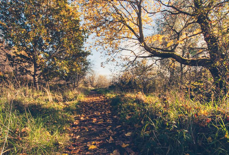 Beautiful, golden autumn scenery with trees and golden leaves in the sunshine in Scotland. United Kingdom royalty free stock images