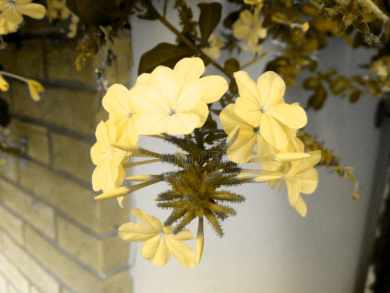 Beautiful golden flowers in a real fairy tale! stock image