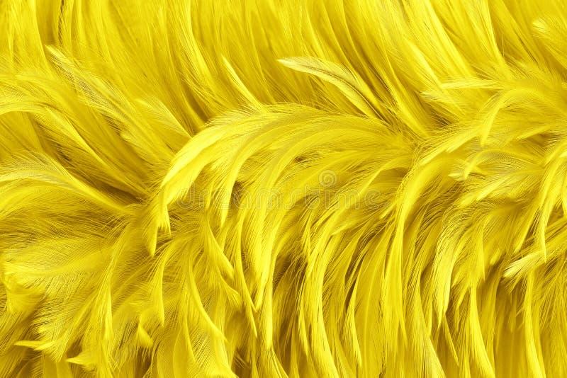 Beautiful golden yellow bird feathers pattern texture background. Beautiful golden yellow bird feathers pattern texture background royalty free stock photos