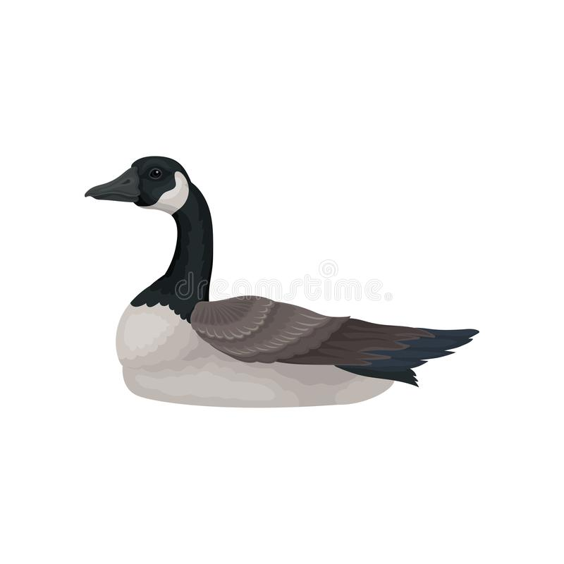 Free Beautiful Goose With Long Black Neck, White Cheek And Gray Body, Side View. Wild Bird. Flat Vector Icon Royalty Free Stock Photos - 134176158
