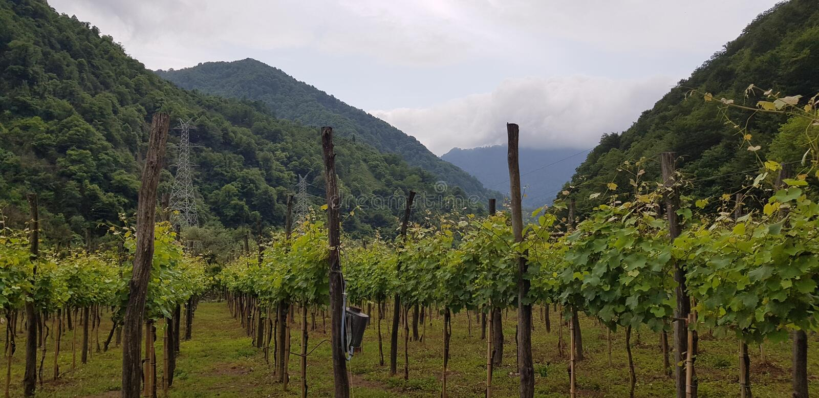 A beautiful vineyard in the valley stock images