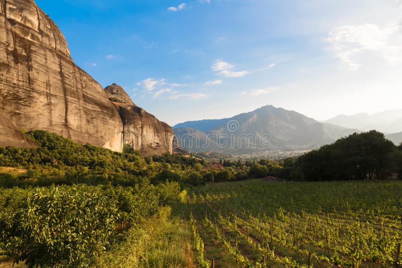 Beautiful grape vineyard before sunset with mountain in Greece stock image