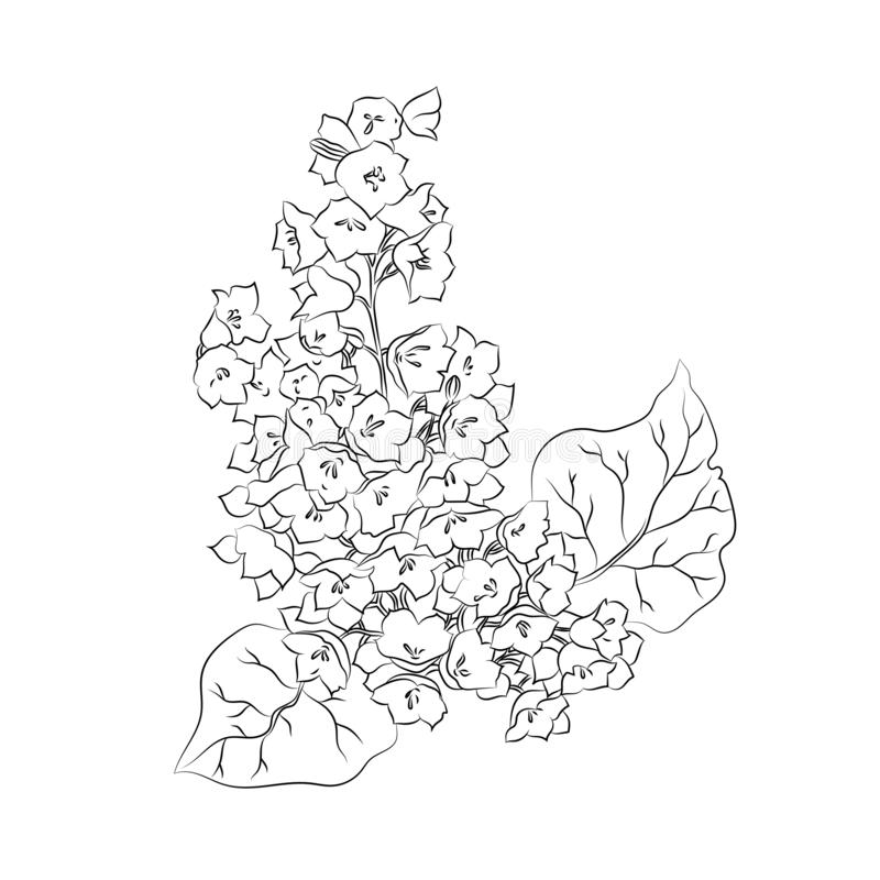 Beautiful graphic flower on white background. Great element of botanical design royalty free illustration