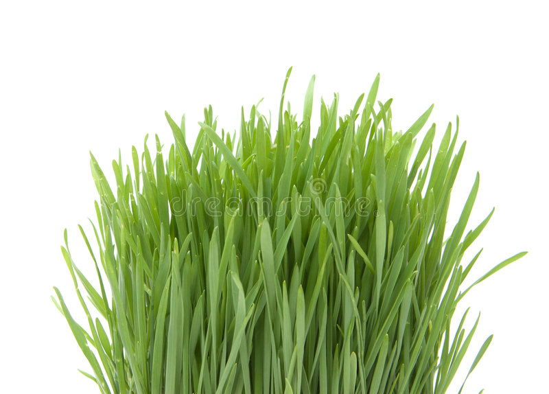 Beautiful grass royalty free stock images