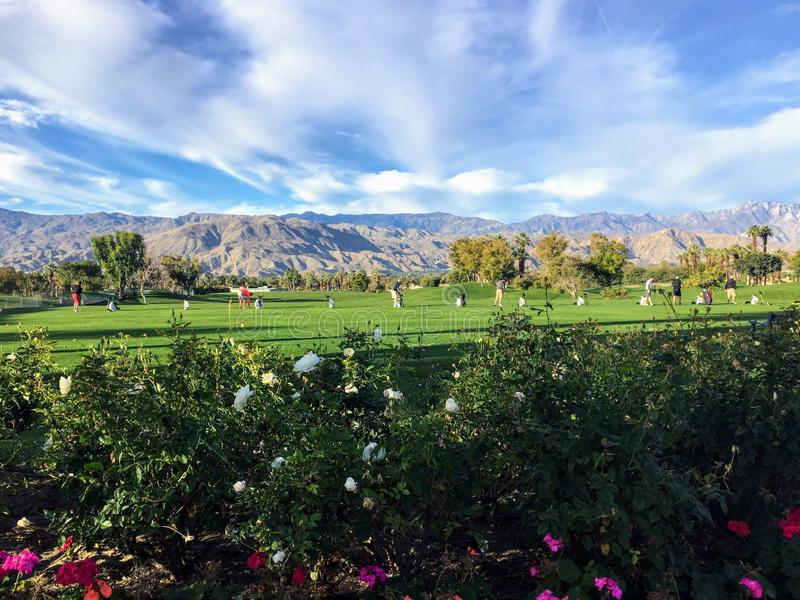 A beautiful grass driving range in Palm Springs, California, United States. The range is grass with flowers in the foreground. And the beautiful San Bernardino royalty free stock photos