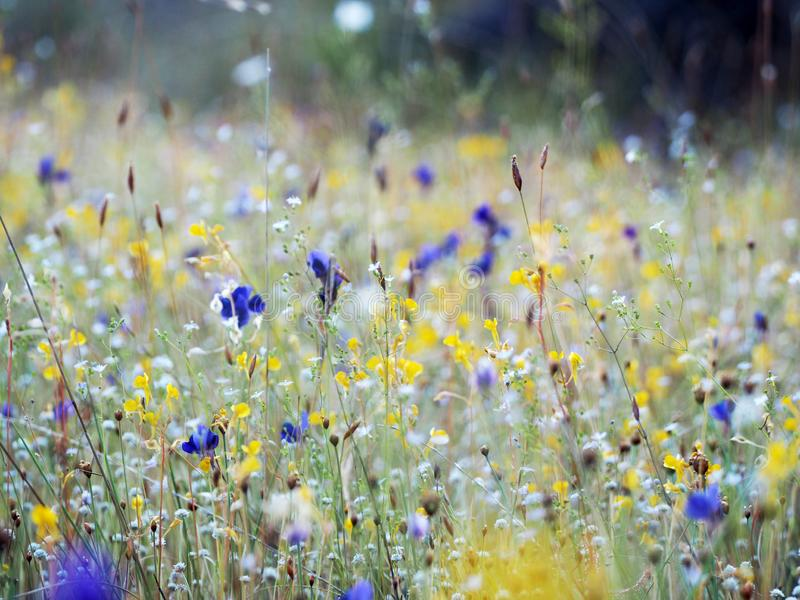 Beautiful grass flower in the field stock photography