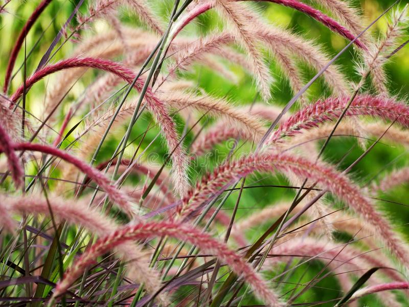 Beautiful grass flower in the field stock photo