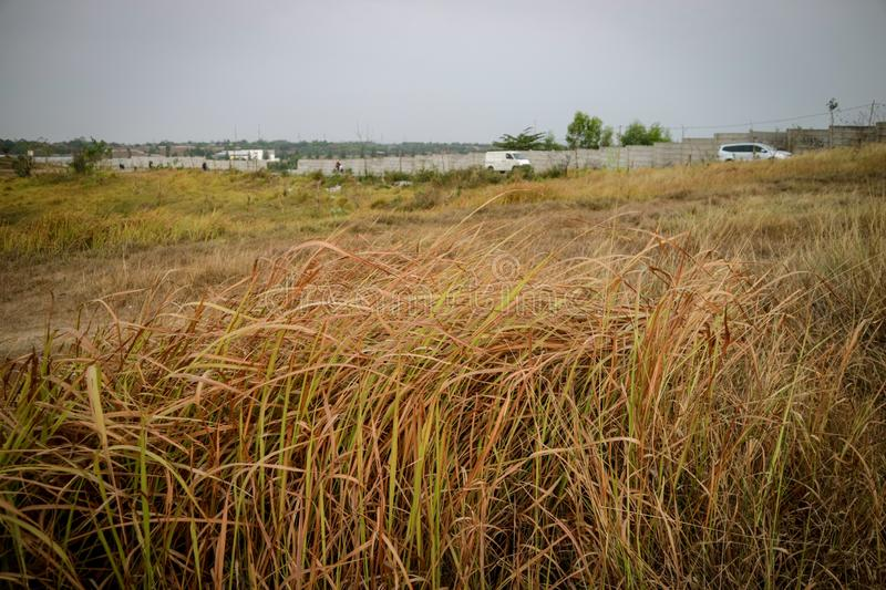 Beautiful grass on the hill in the afternoon. Beautiful grass on the hill, photos taken in the city of Bekasi - Indonesia in the afternoon stock photography