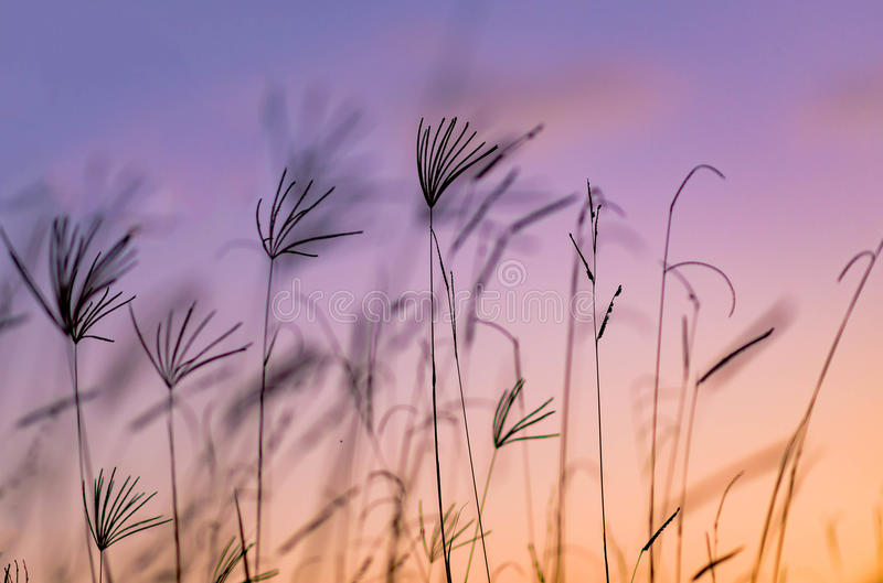 Beautiful. Grass on the montville top stock photography
