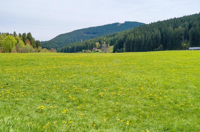 Beautiful grassland scenery in Germany. There are yellow flowers on the green grassland.This is a nice background stock photo