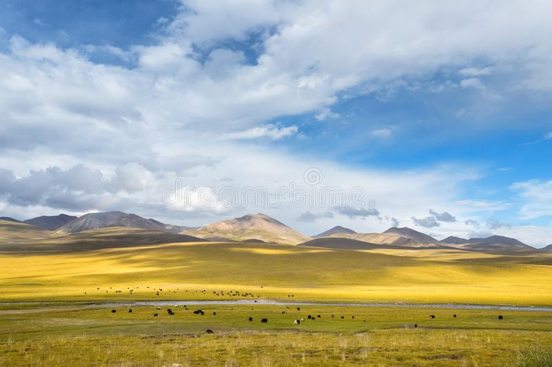 Beautiful grassland scenery stock image