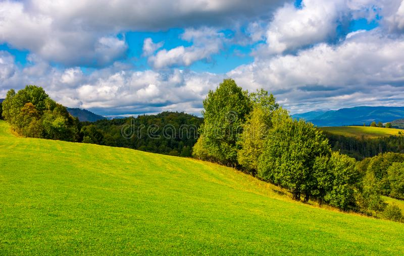 Beautiful grassy meadow on hillside in mountains stock photos