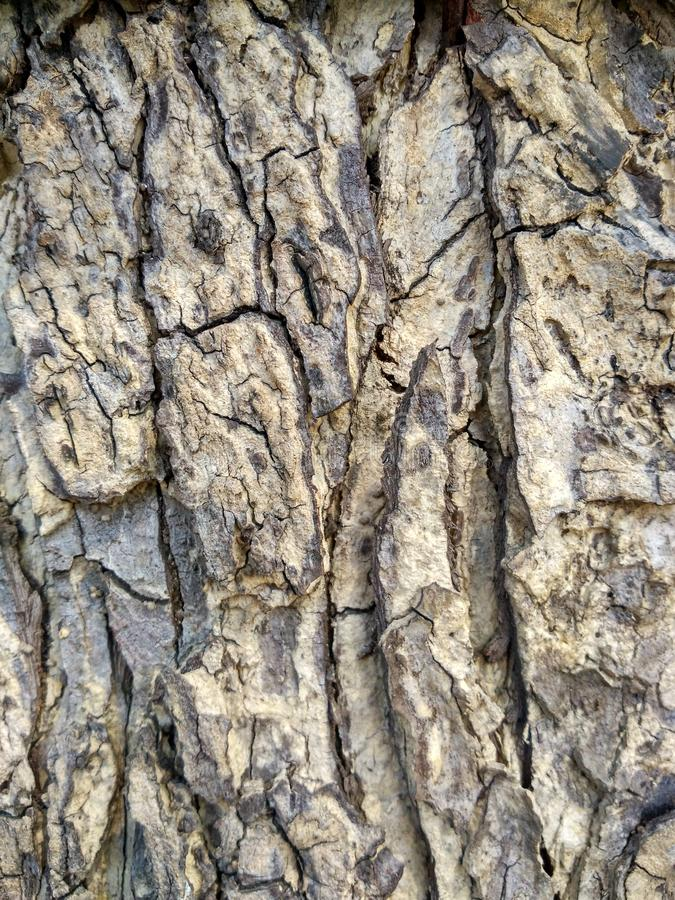 Beautiful gray and black tree bark is abstract Art and Texture royalty free stock photo