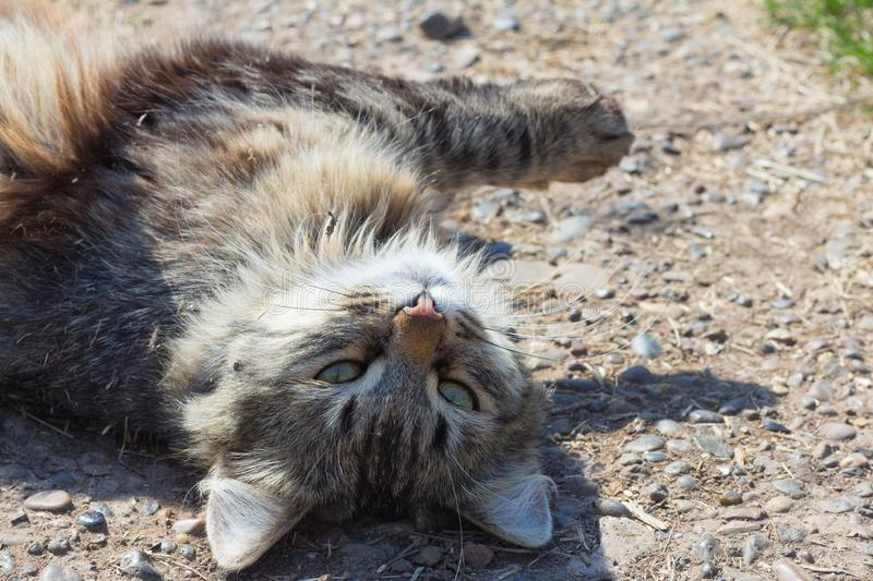 Beautiful gray cat lying on the ground, all in the trash,eyes closed with pleasure royalty free stock photography