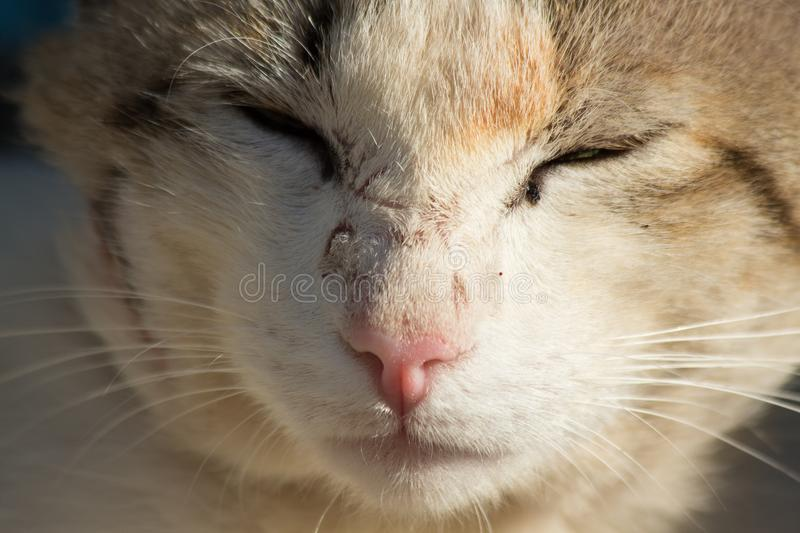 Beautiful gray homeless cat in the street royalty free stock photo