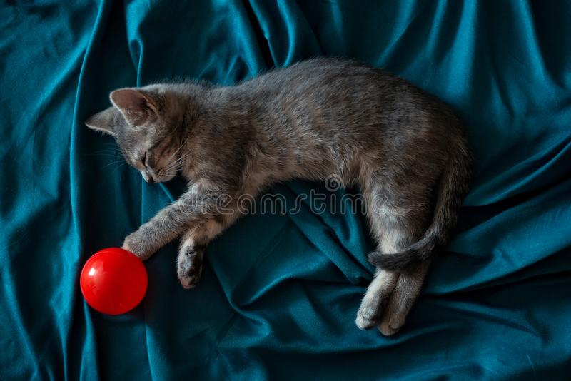 Beautiful gray little cat sleeping on the couch with a red ball royalty free stock photos