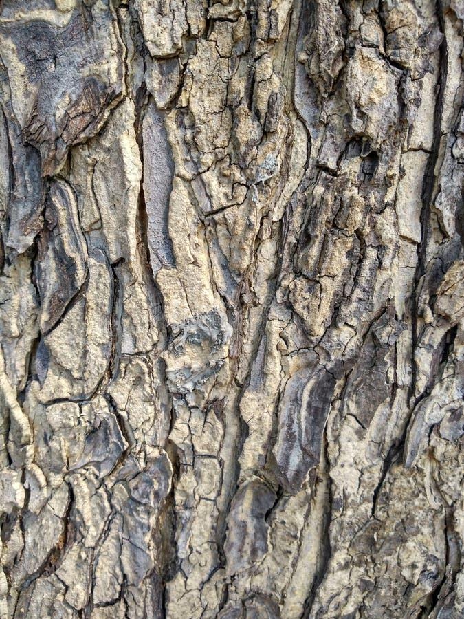 Beautiful gray tree bark is abstrack Art stock image