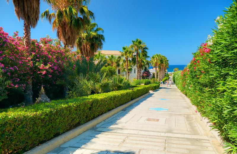 Beautiful Greek hotel road pathway to sea beach for tourists among red white rose colorful flowers and green palms. Greece islands stock images
