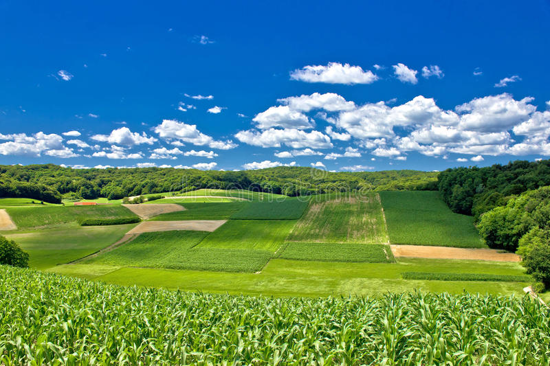 Beautiful green agricultural landscape in Croatia stock image