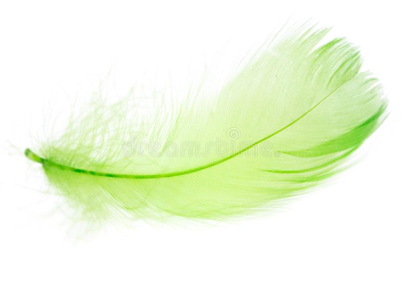 Beautiful green feather on a white background royalty free stock images