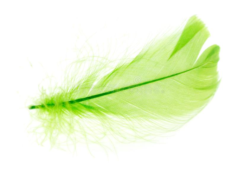 Beautiful green feather on a white background royalty free stock photo