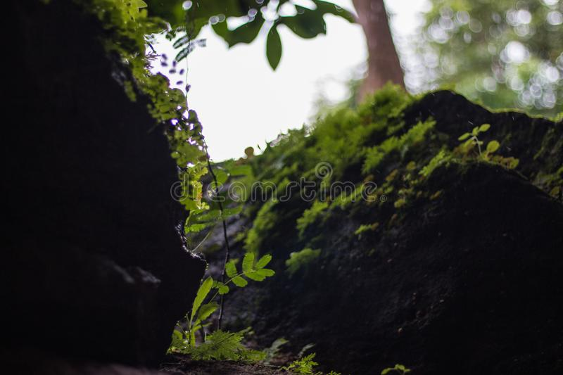 Beautiful green fern leaves foliage and different leaves on background stock photos